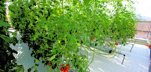tecnica e strmenti per la coltura idroponica