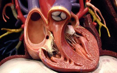 specialisti di cardiochirurgia a Bologna