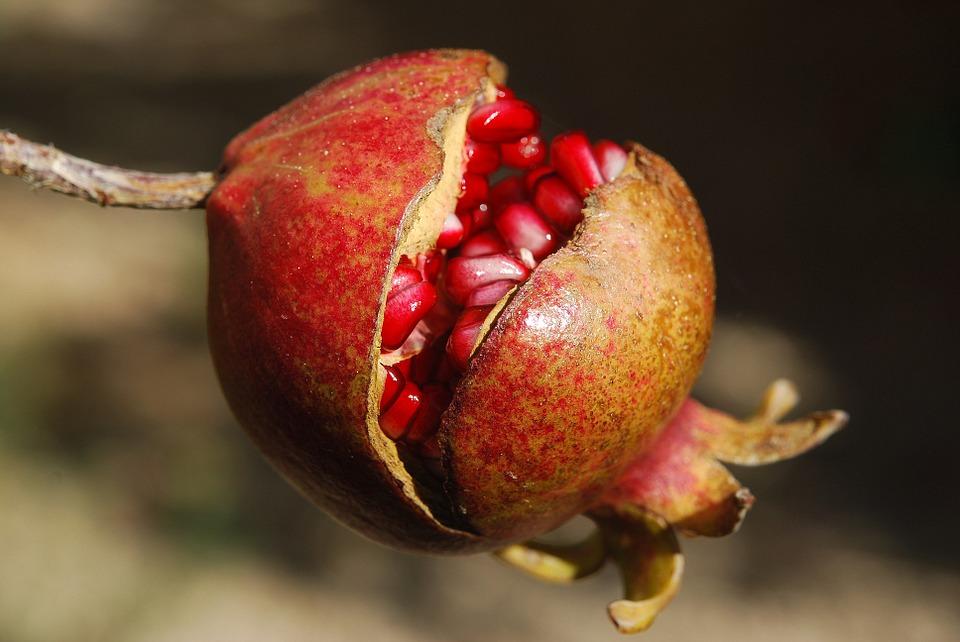 Mangiare più frutta fa bene