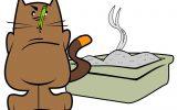 Lettiere Per Gatti: Igiene domestica?